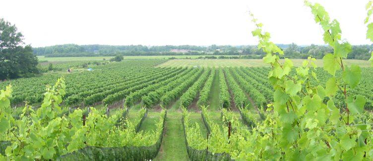 Niagara wine country
